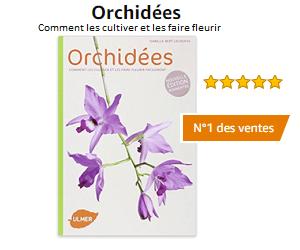 Comment Couper Une Orchidee Apres Floraison Faire Repartir La Tige